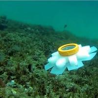 Nyomtatott medúzarobotok figyelik a korallokat