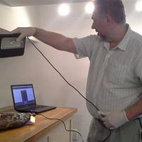 Évszázados mogyorót és a világ legöregebb sonkáját szkennelték le