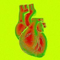 Amerikai kutatók működő szívrészeket nyomtattak