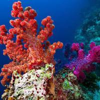 3D nyomtatással mentene meg korallzátonyokat egy walesi természetbarát