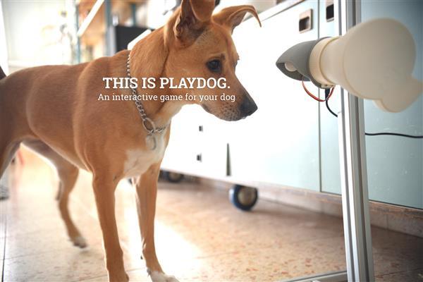 playdog.jpg