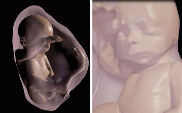 unborn.jpg