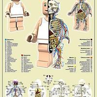 A Lego-ember anatómiája