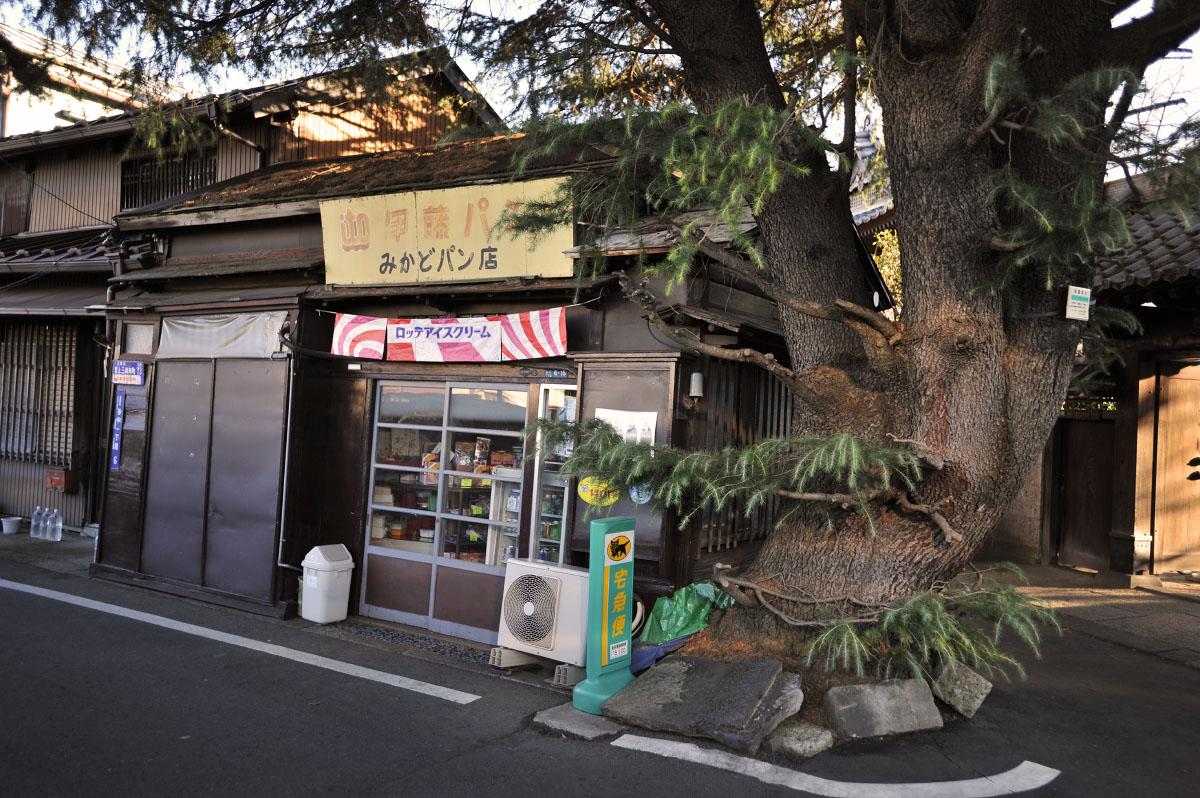 Yanaka Norma fája.