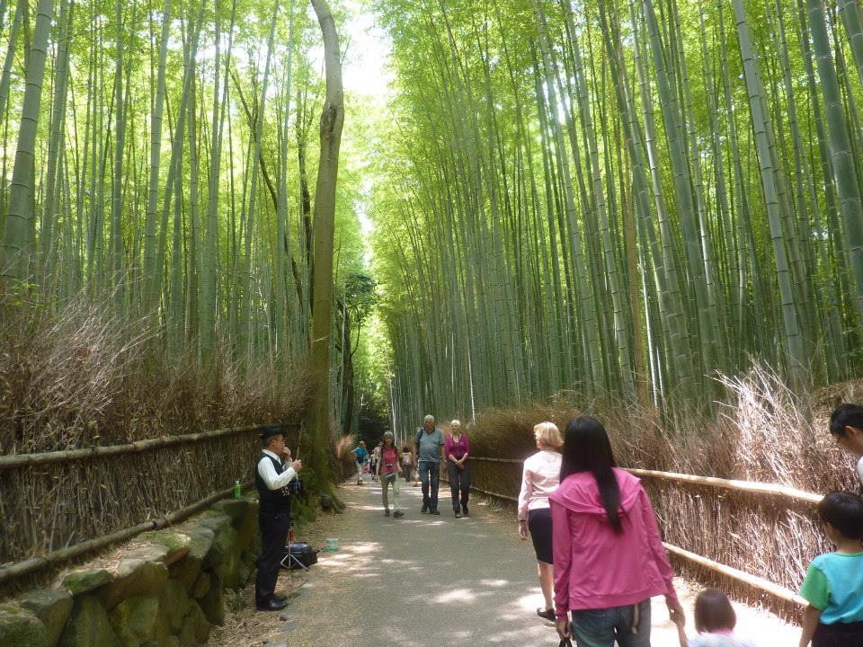 A Bambusz erdőn keresztül