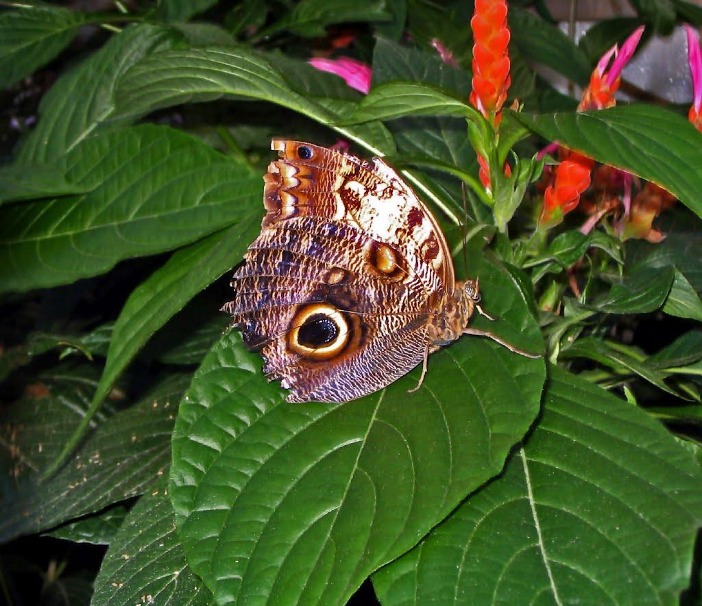 Montreal Pillangó Múzeum