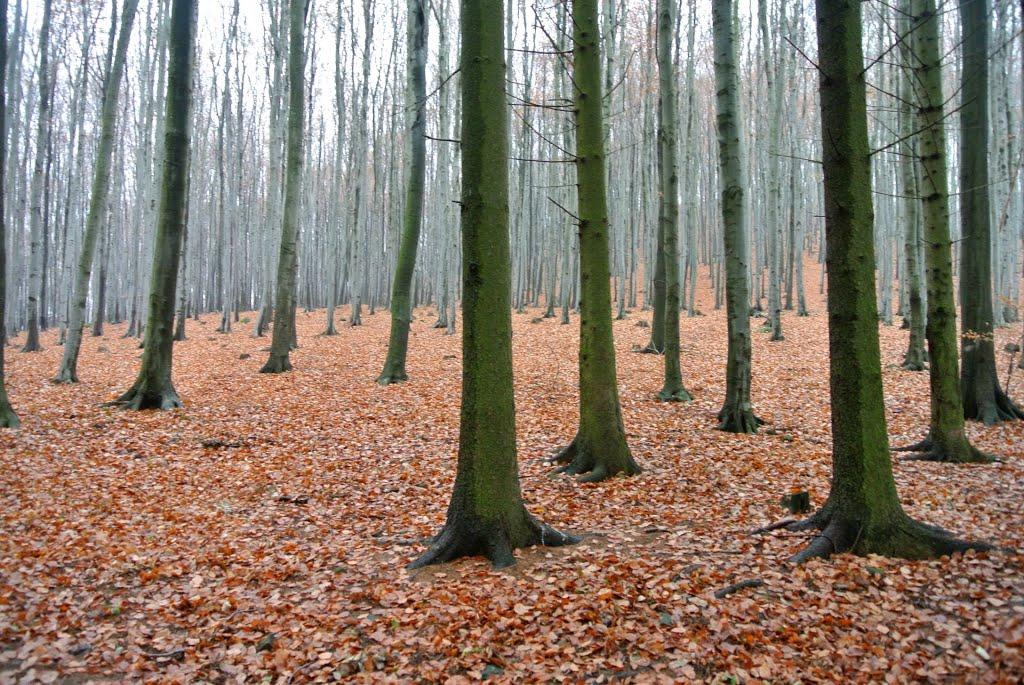 Mátraszentimre, erdő