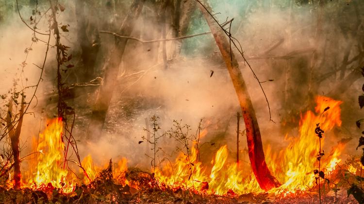 Az erdőtüzek megfékezése közös érdekünk