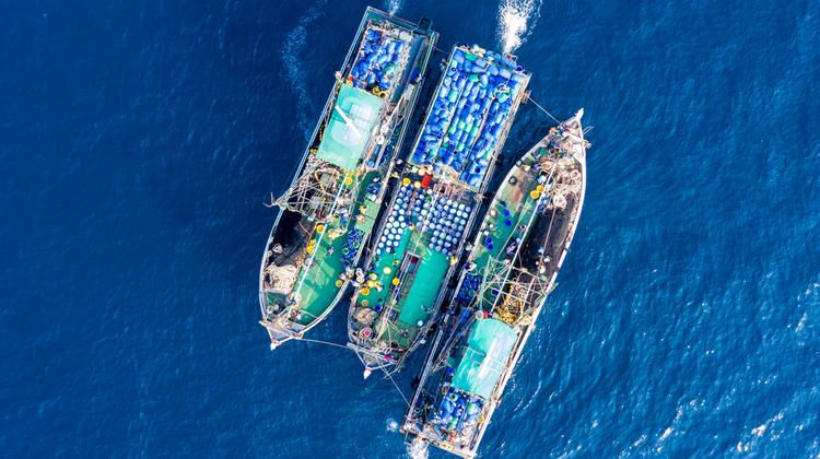 A túlhalászat következményei