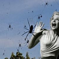 Olyan hangosan üldözött egy fickó egy pókot, hogy a szomszédok feljelentették családon belüli erőszakért