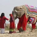 Olyan hideg van, hogy Indiában pulóvert húztak az elefántok!