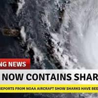 Egy csomóan beszopták, hogy az Irma hurrikán tele van cápákkal