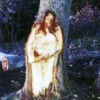 Jézus jelent meg egy tuskón Argentínában