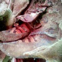 Hülyeség az egész történelem: Tisza-cipős múmiát találtak!