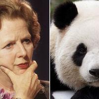 Margaret Thatcher utálta a pandákat :(