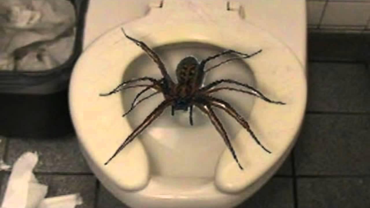 spiderinaustralia.jpg
