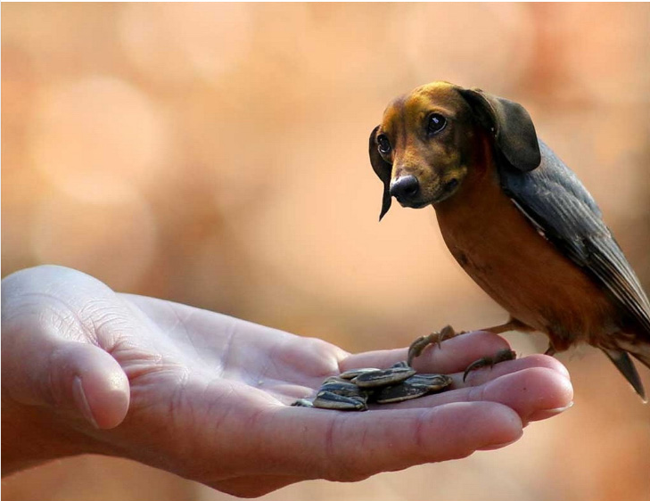 dird-doxie.png