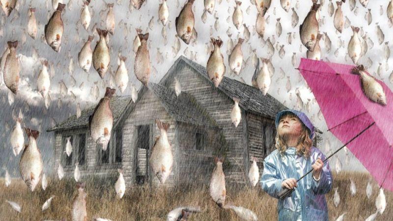 fishrain.jpg