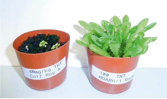 tnt-plants.jpg