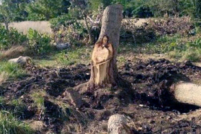 treesus2.jpg