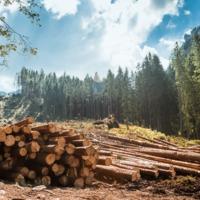 Robotokra bízzák a humán munkaerő számára unalmas erdőgazdálkodási feladatokat