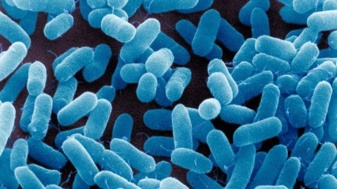 antibiotikumok3.jpg