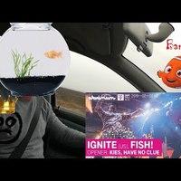 BARANGOLÓ - Ignite, Fish!, Kies - Akvárium (2019.02.03.)