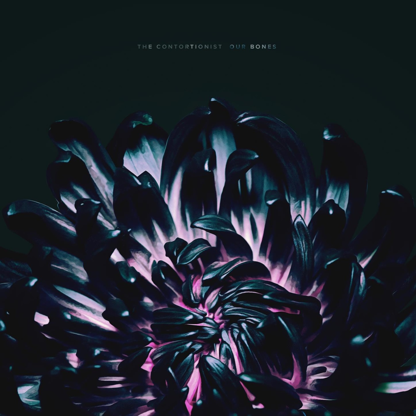 Félgőzzel - The Contortionist – Our Bones (EP, 2019)