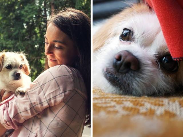 Megölte egy amerikai bulldog Boggie kiskutyáját