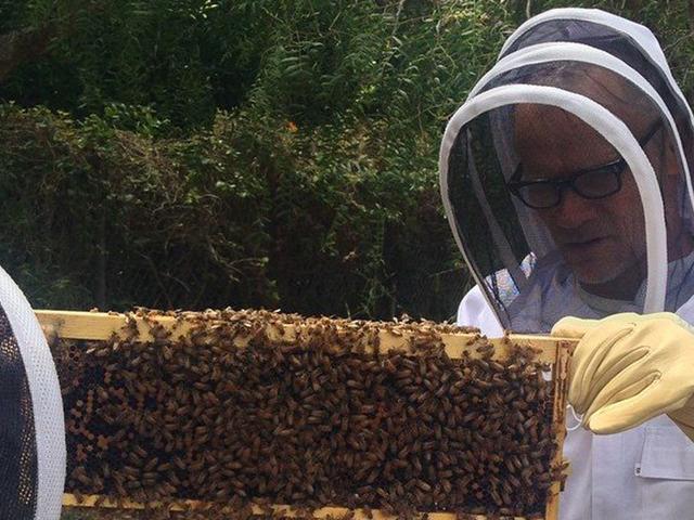 200 ezer méhvel él a RHCP basszerosa