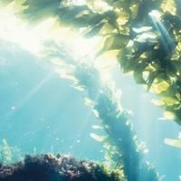 Bőröd szépsége a tengerben rejlik...