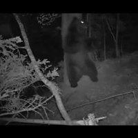 Mi történik valójában az erdőben az éjszaka folyamán! :)