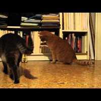 Macska vs metronóm :D