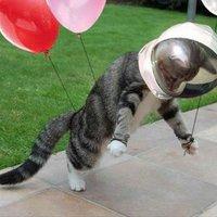 Űrhajós cica :)