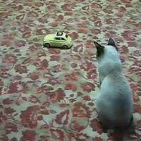 Megrémült cica