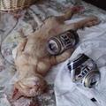 Részeg macska