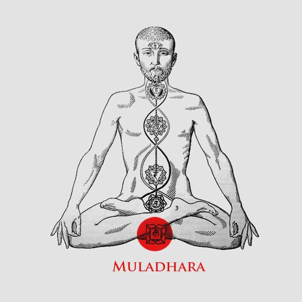 essential-oil-for-the-first-chakra-the-root-chakra-muladhara-pliz0qcffh.jpg