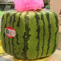 Kocka alakú görögdinnye