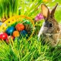 Húsvéti kis nyuszik