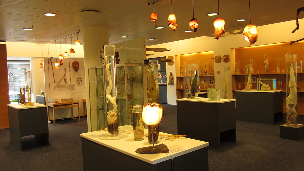 1024px-icelandic_phallological_museum_reykjavik.JPG