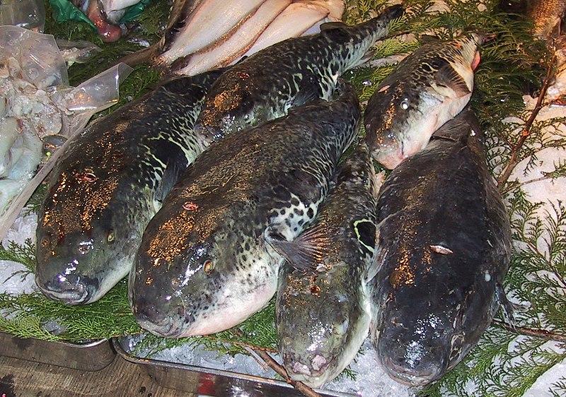 800px-fugu_tsukiji_cr.jpg