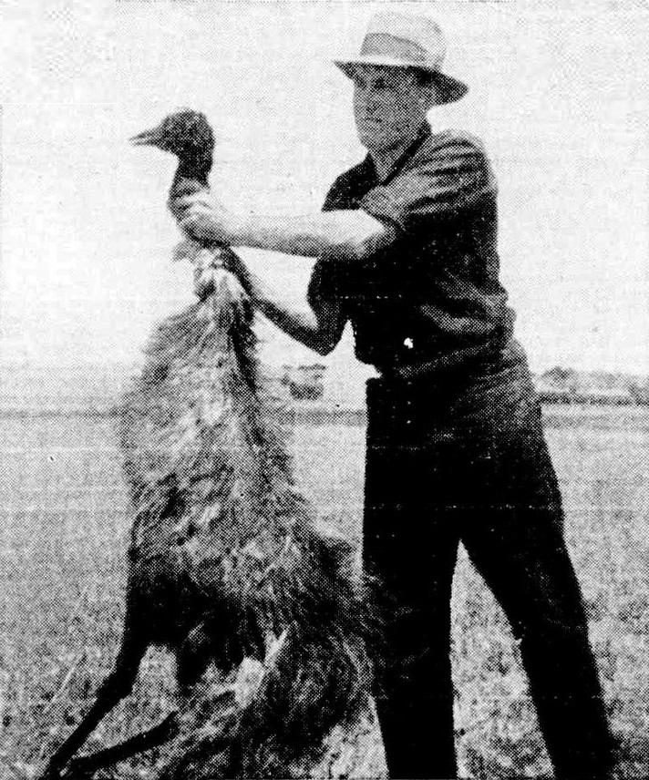 deceased_emu_during_emu_war.jpg