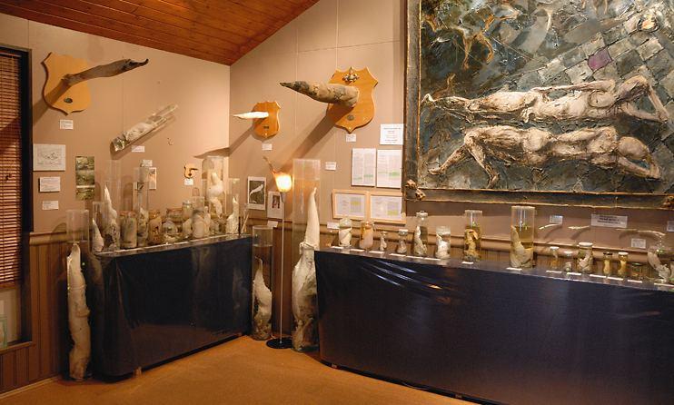 husavik_phallusmuseum.jpg