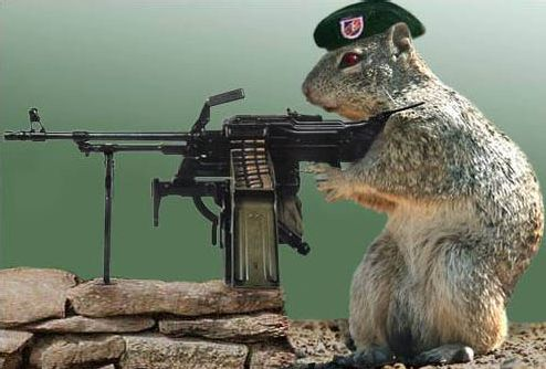 sovietsquirrel.jpg