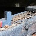 Asztalos: a faanyag kártevői és megelőzésük