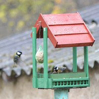 Nyakunkon a madárszezon