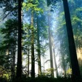 A faanyagok vetemedése