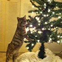 Macskabiztos karácsonyfa