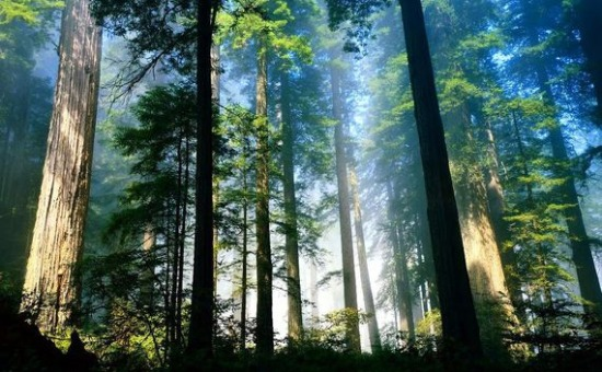 forest210240ai1.jpg