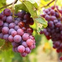 Holt borok társasága